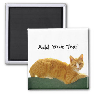 Orange Tabby Cat on Green Fence 2 Inch Square Magnet