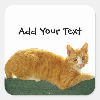 Orange Tabby Cat on Green Fence Square Sticker