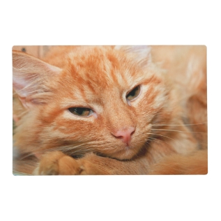 Orange Tabby Cat Placemat at Zazzle