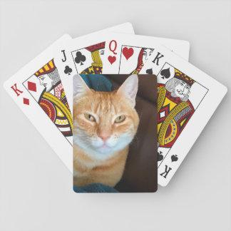 Orange tabby cat playing cards