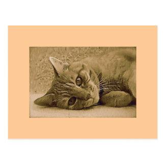 Orange Tabby Cat Post Card