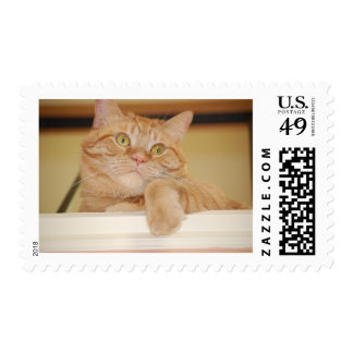 Orange Tabby Cat Stamps