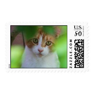 Orange tabby cat postage