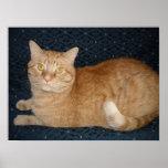 Orange Tabby Cat Poster