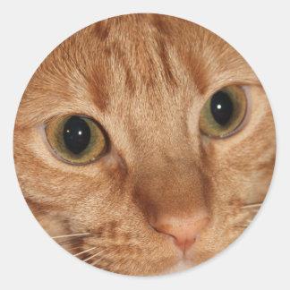 Orange Tabby Cat Profile Face Close up Classic Round Sticker