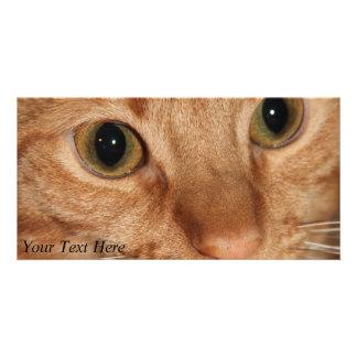 Orange Tabby Cat Profile Face Close up Photo Card