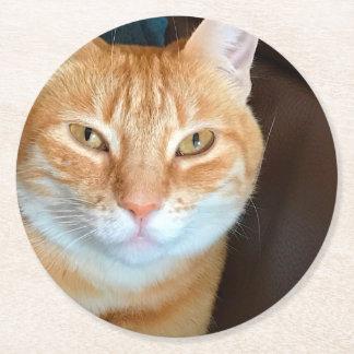 Orange tabby cat round paper coaster