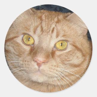 Orange Tabby Cat Round Stickers