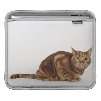 Orange Tabby cat Sleeve For iPads