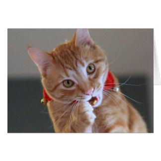 Orange Tabby Cat Wearing Red Christmas Collar Card