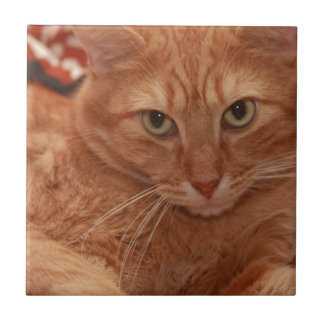 Orange Tabby Ceramic Tile