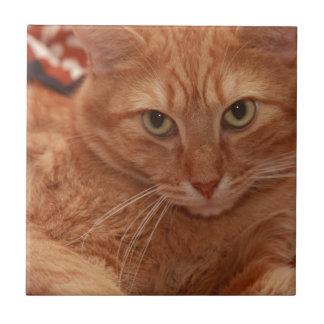 Orange Tabby Ceramic Tile