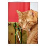 Orange tabby Christmas Cards