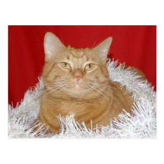 Orange tabby Christmas Postcard