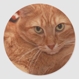 Orange Tabby Classic Round Sticker