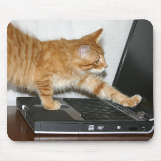 Orange tabby computer mousepads
