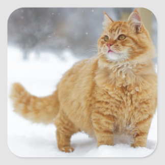 Orange Tabby in the snow Square Sticker