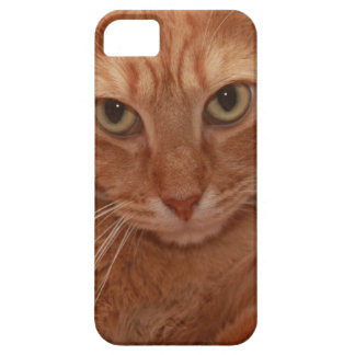 Orange Tabby iPhone SE/5/5s Case