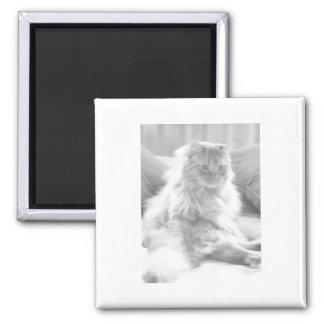 Orange Tabby Kitten/Black and White Photography Magnet