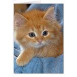 Orange Tabby Kitten Greeting/Note Cards