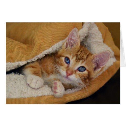 Orange Tabby Kitten in Bed