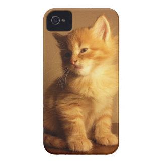 Orange Tabby Kitten iPhone 4 Cover