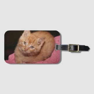 ORANGE TABBY KITTEN LUGGAGE TAG