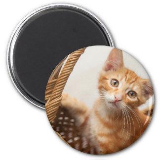 Orange Tabby Kitten Magnet