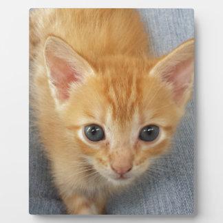 Orange tabby kitten plaque