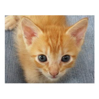 Orange tabby kitten postcard