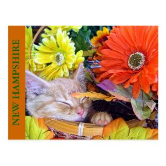 Orange Tabby Kitty Cat Napping, Flower Basket Postcard