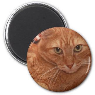 Orange Tabby Magnet