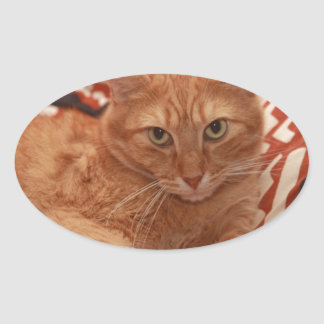Orange Tabby Oval Sticker