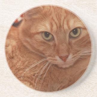 Orange Tabby Sandstone Coaster