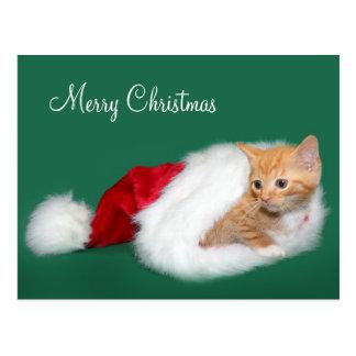 Orange tabby Santa hat Postcard