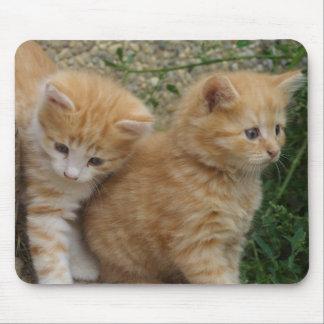 Orange Tabby Siblings Mouse Pad