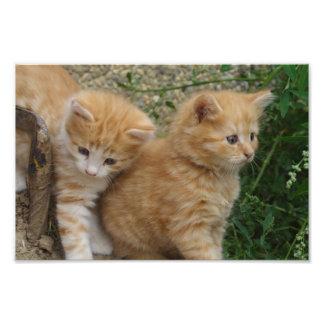 Orange Tabby Siblings Photo