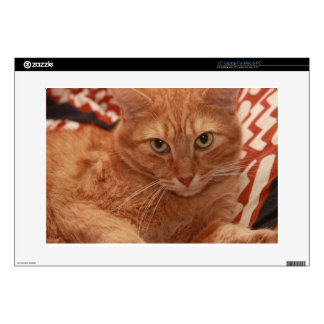"Orange Tabby Decal For 15"" Laptop"