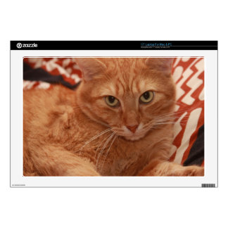 Orange Tabby Skins For Laptops