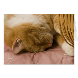 Orange tabby sleeping card