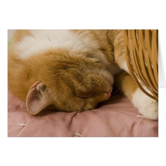 Orange tabby sleeping card