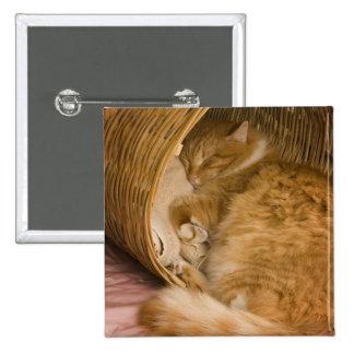 Orange tabby sleeping in hamper 2 inch square button