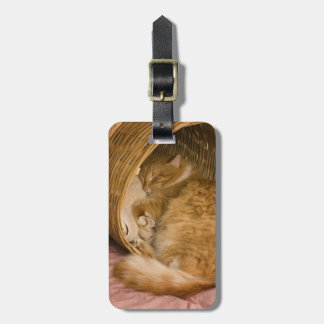 Orange tabby sleeping in hamper luggage tag