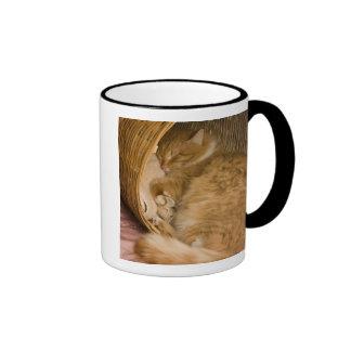 Orange tabby sleeping in hamper ringer coffee mug