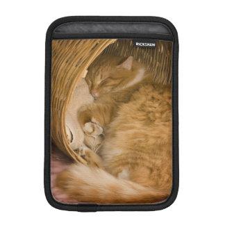Orange tabby sleeping in hamper sleeve for iPad mini
