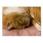 Orange tabby sleeping postcard