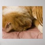Orange tabby sleeping poster