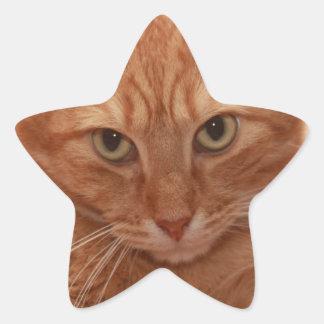 Orange Tabby Star Sticker