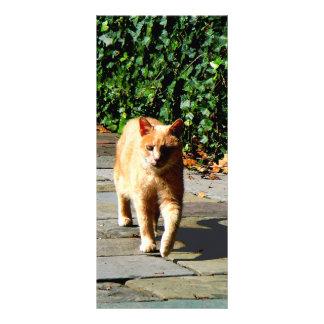 Orange Tabby Taking a Walk Rack Card