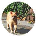 Orange Tabby Taking a Walk sticker